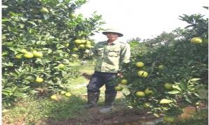 Hiệu quả hoạt động của chi hội làm vườn thôn Quảng Uyên xã Minh Châu huyện Yên Mỹ