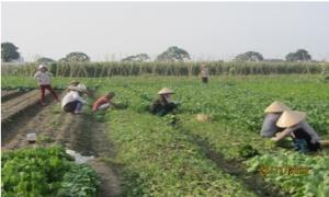 Hội Nông dân xã Ngọc Thanh quản lý tốt các nguồn vốn vay giúp hội viên phát triển kinh tế