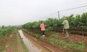 Hội nông dân xã Việt Cường nhiều hoạt động hội viên phát triển kinh tế.