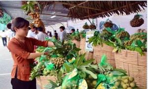 Nhãn Hưng Yên sẽ vào thực đơn của Vietnam Airline