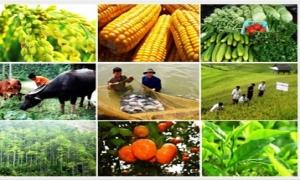Nhiều chính sách khuyến khích phát triển hợp tác, liên kết sản xuất nông nghiệp