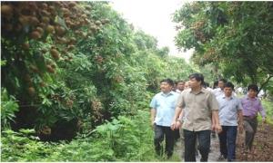 Bộ Nông nghiệp và Phát triển nông thôn sẵn sàng hỗ trợ tỉnh Hưng Yên tiêu thụ nhãn