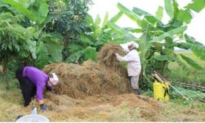 Phát huy vai trò của Hội Nông dân trong xây dựng nông thôn mới
