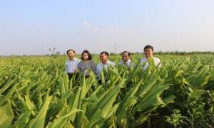 Đổi mới và nâng cao chất lượng công tác tuyên truyền, vận động hội viên nông dân ứng dụng tiến bộ KHKT vào sản xuất nông nghiệp