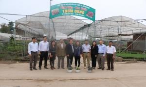 Hiệu quả hoạt động của hợp tác xã hoa - cây cảnh và các chi, tổ hội nghề nghiệp trong phát triển kinh tế làng nghề gắn với xây dựng nông thôn mới