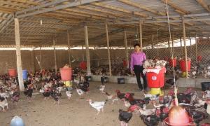 Vai trò của Hội trong việc tuyên truyền, vận động hội viên nông dân phát triển kinh tế tập thể; hướng dẫn, tư vấn thành lập tổ hợp tác, hợp tác xã ở Kim Động