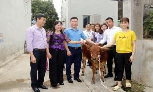 Tặng bò cho hội viên nông dân có hoàn cảnh khó khăn