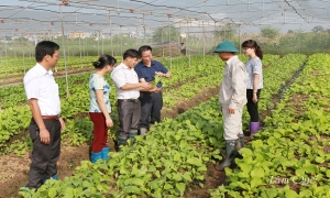 Công tác xây dựng và quản lý hiệu quả quỹ hỗ trợ nông dân ở thành phố Hưng Yên