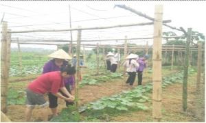 Cầm tay chỉ việc giúp nông dân phát triển sản xuất