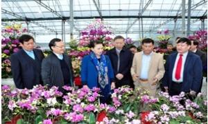 Chủ tịch Quốc hội Nguyễn Thị Kim Ngân thăm mô hình trồng hoa, cây cảnh tại Hưng Yên