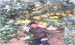 Lão nông xứ Nhãn lai tạo thành công giống bưởi mới