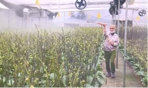 Mô hình trồng hoa lan thu 5 tỉ đồng ở Văn Giang