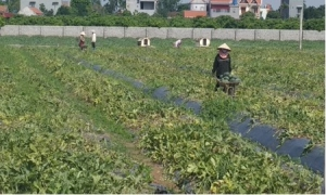 Đẩy mạnh các hoạt động hỗ trợ nông dân phát triển sản xuất
