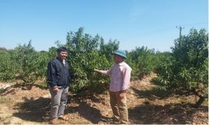Khai thác hiệu quả nguồn vốn vay từ quỹ hỗ trợ nông dân