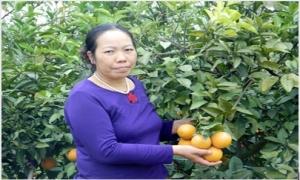 Choáng ngợp trước vựa cam 30 mẫu của lão nông ở Hưng Yên
