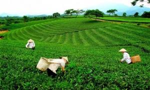 Phê duyệt Đề án Phát triển du lịch nông thôn gắn liền với xây dựng nông thôn mới