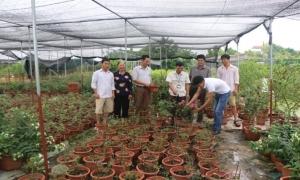 Bước chuyển mình trong nông nghiệp của Văn Giang