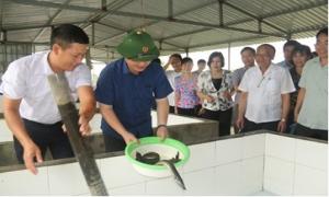 Đa dạng các hoạt động hỗ trợ hội viên nông dân phát triển kinh tế