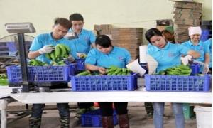 Hưng Yên đặc biệt ưu tiên khi đầu tư vào lĩnh vực nông nghiệp, nông thôn