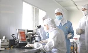 Việt Nam sản xuất thành công viên sủi curcumin