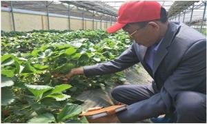 Nông dân Việt xem dân xứ Hàn sưởi ấm, chăm cây bằng thuốc bổ