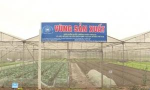 Hưng Yên có trên 220 héc ta rau và cây ăn quả VietGAP