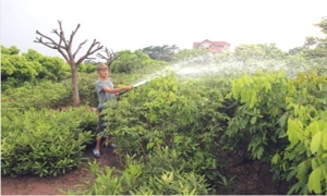 Sản xuất nông nghiệp ứng phó với thời tiết mùa hè