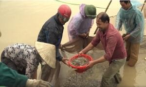 Hiệu quả mô hình nuôi tôm thẻ chân trắng nước ngọt ở Kim Động