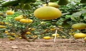 Học Bác, người nông dân vươn lên thoát nghèo