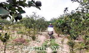 Hưng Yên hiện có trên 680 trang trại