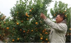 Nâng cao hiệu quả nguồn lực giúp nông dân phát triển sản xuất