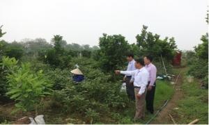 Hoàn thành kiểm tra công tác Hội và phong trào nông dân năm 2020